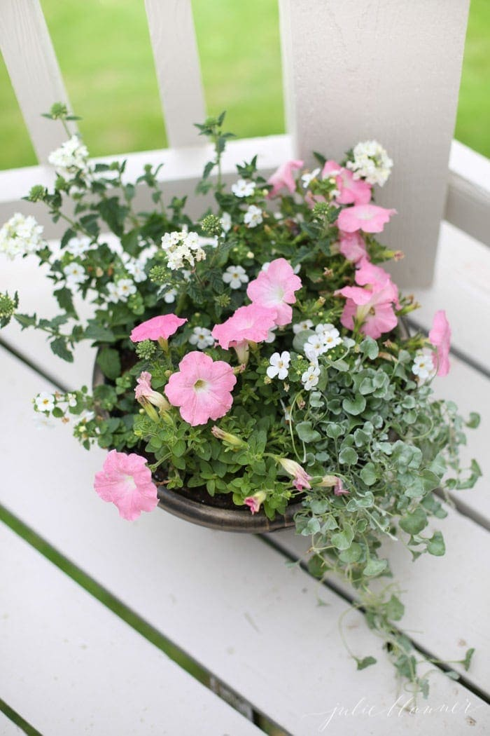 A garden pot filled with pink and white blooming annuals
