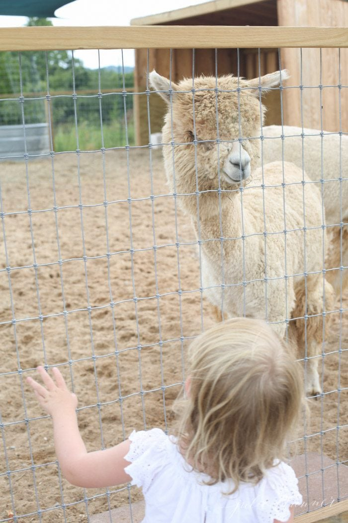 things to do in Branson MO animal park