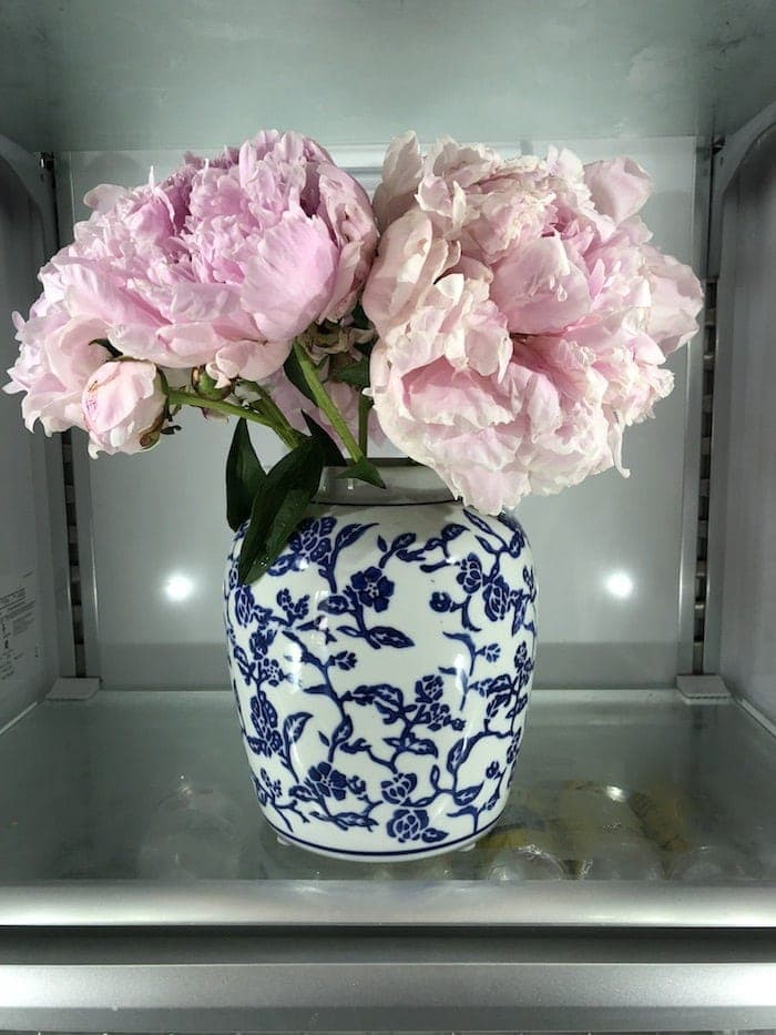 A blue and white vase full of pink peonies inside a refrigerator.