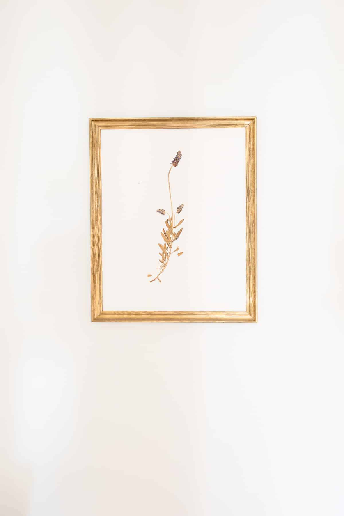 pressed botanical in gold frame hanging on wall