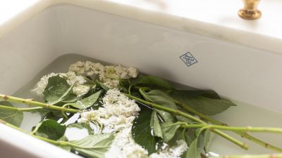 hydrangea soaking in sink to revive them