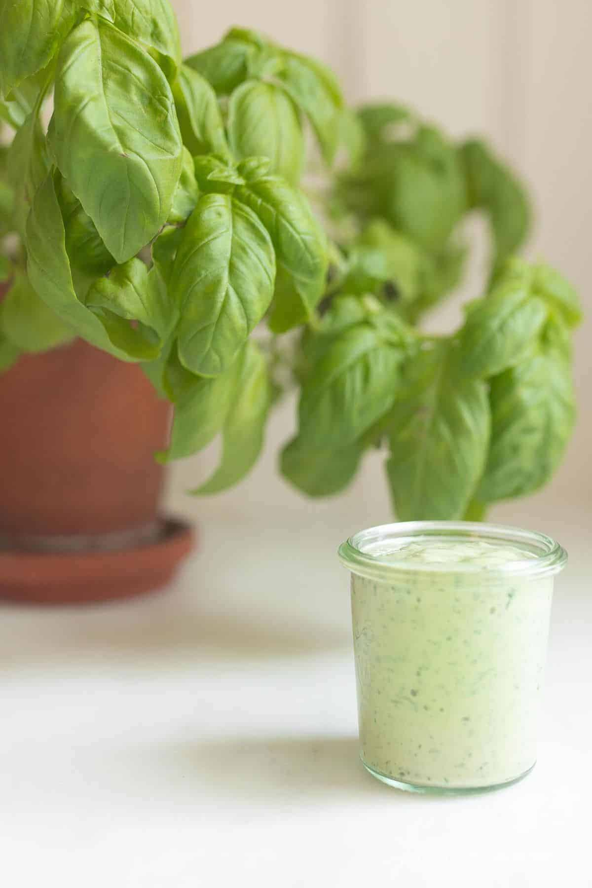 White surface with a small clear jar of pesto aioli and a basil plant to the side.