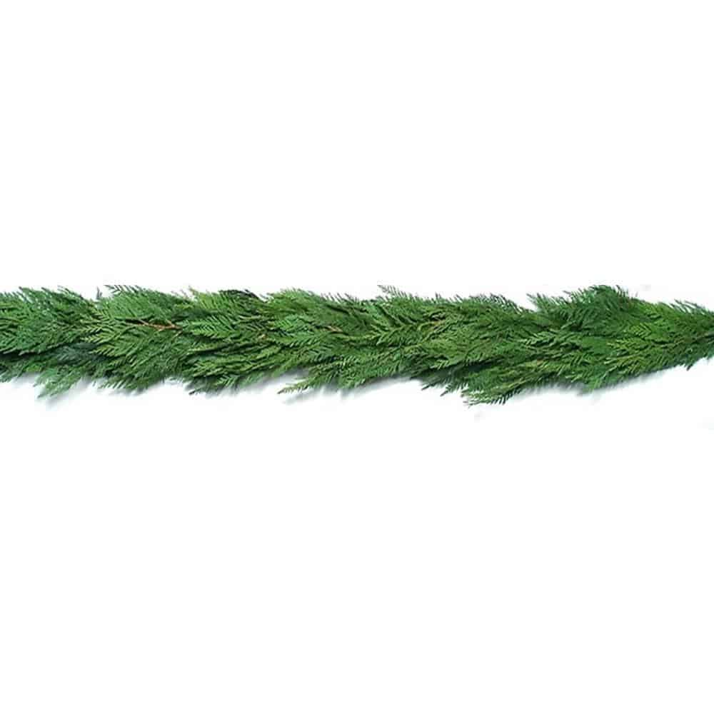 cedar garland on white background.