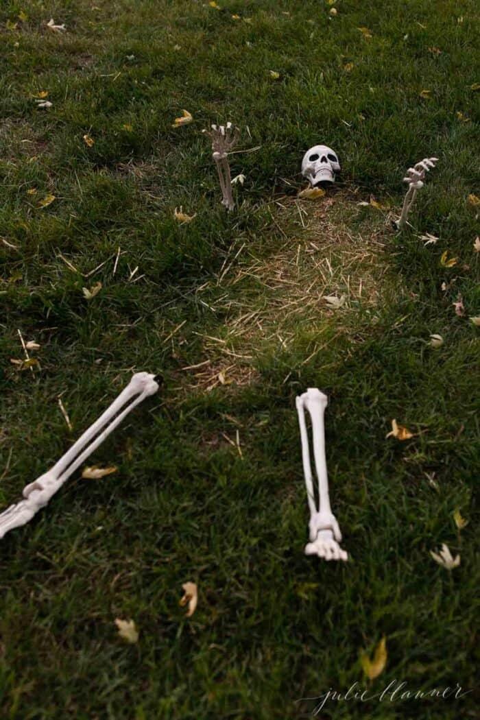 A skeleton peeking through the grass for Halloween decorations.
