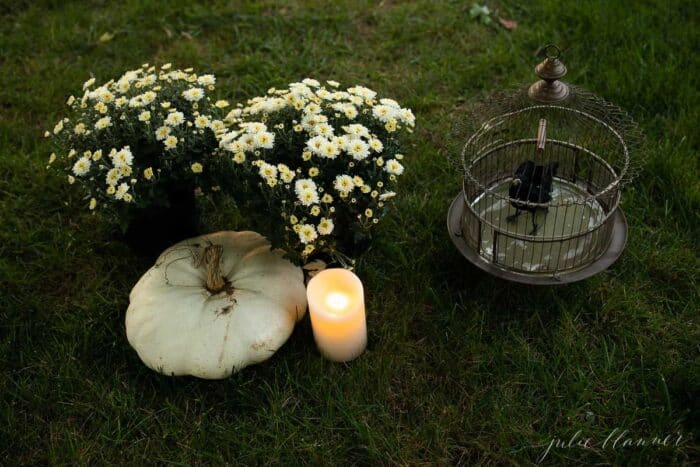 Mums, heirloom candles and a witch's broom set up for Halloween decorations on the grass.
