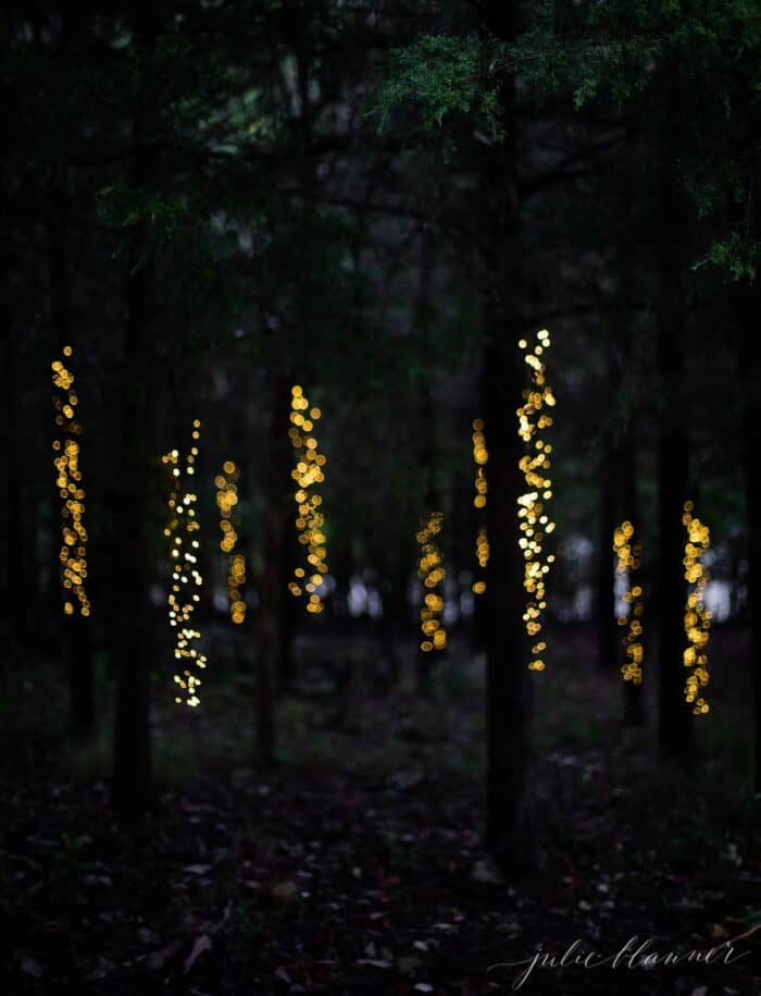 A forest of trees decorated with Christmas lights.