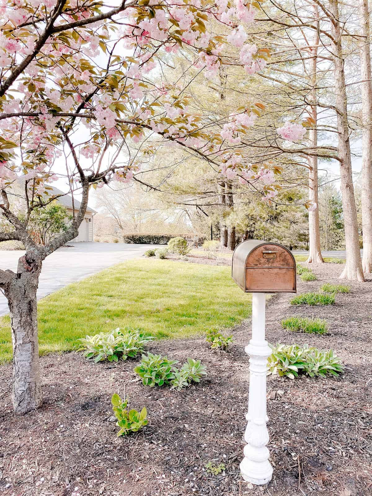 copper mailbox accented by pink blooming tree