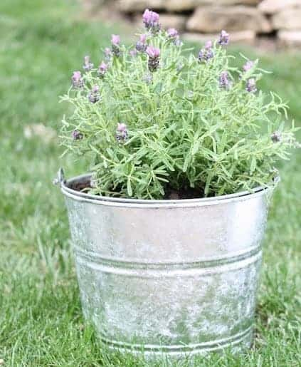 planter in grass