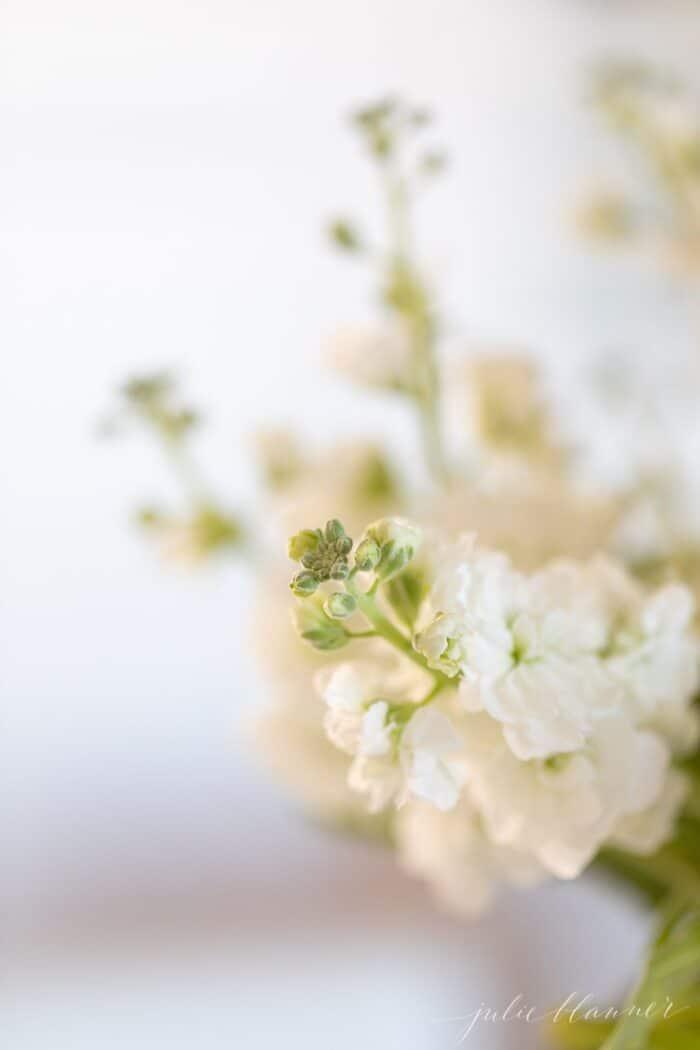 Perto de flores brancas sobre uma superfície de mármore.