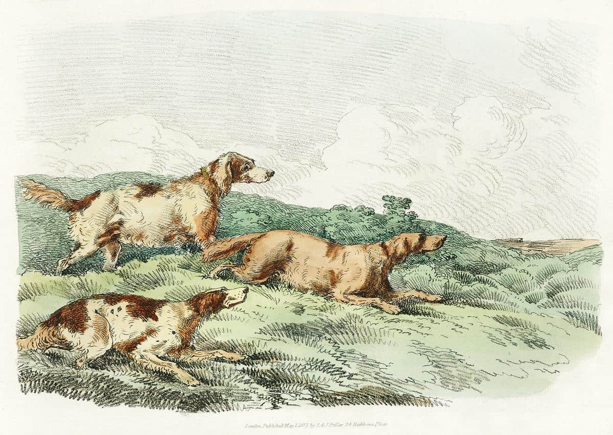 sketch of 3 dogs in green grass
