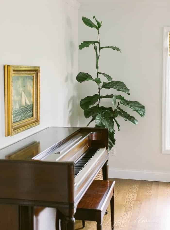 fiddle fig piano and painting