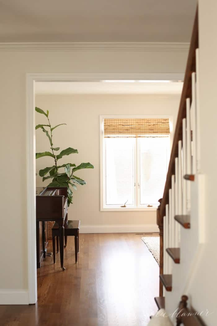Looking into a white living room from an entryway, with a vintage piano and a large fiddle leaf fig tree in the corner.
