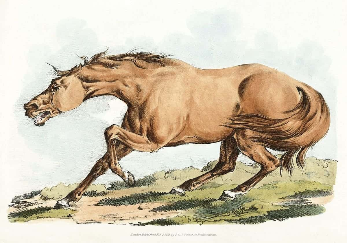 hand drawn picture of a horse