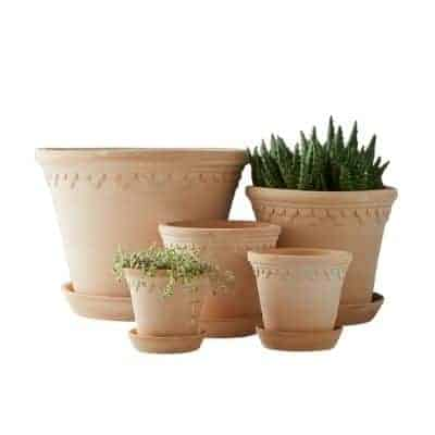 scalloped pots with plants