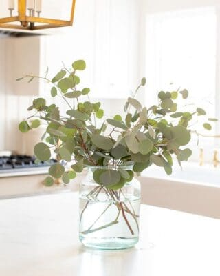 A clear glass vase on the island of a white kitchen, filled with silver dollar eucalyptus.