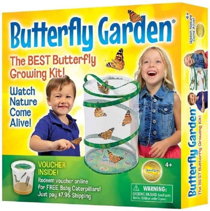 The gift box for a butterfly garden, a science inspired Amazon gift